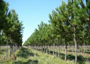 Ingenieros forestales reafirman su papel estratégico